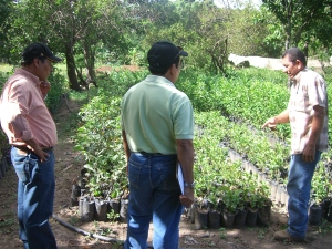 Don Julio shows us a selection of citrus trees