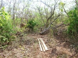 Harvesting Lumber in El Guayabal, Nagarote