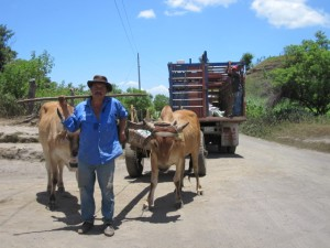 Santiago Sabino Sanchez Zapata picking up his 300 plantain corms with an oxcart.  This particular area of Nagarote is arid and visibly deforested.