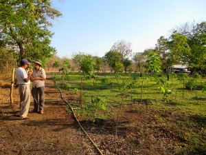 Delaura and Manrique discuss details of his next planting by his field of mixed papaya - plantain - fruit and hardwood trees.